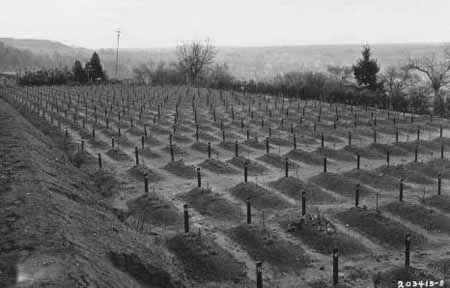 "Cemetery at Hadamar where victims of ""euthanasia"" at the Hadamar ""euthanasia"" killing center were buried. This photograph was taken toward the end of the war. Hadamar, April 1945."